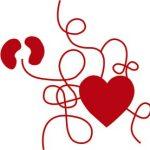 Hjärtat pumpar blodet animerad bild